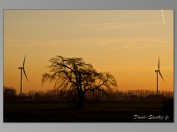 TNZ-windmills-sunset-01